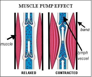 Muscle contraction using Compression Garment